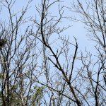 Anidamiento aves en los manglares