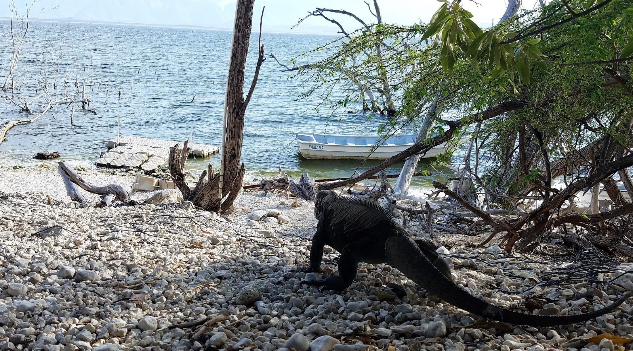 Las iguanas y otras especies de la República Dominicana están en peligro de extinción. Imagen del Lago Enriquillo en Bahoruco. Foto JR Torres