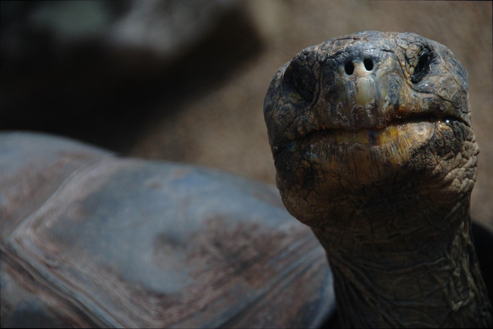 Día Mundial del Ambiente, un millón de especies en peligro de extinción y los bosques tropicales bajo ataque
