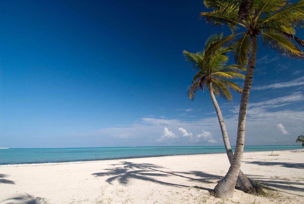 Palmeras en la playa de Punta Cana
